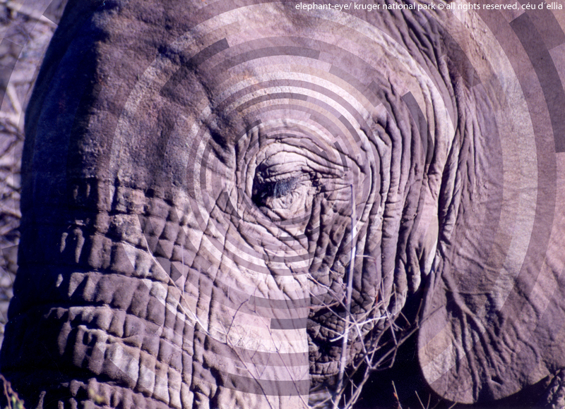 AfricaElephant-Eye-800